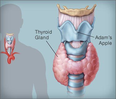 _thyroid